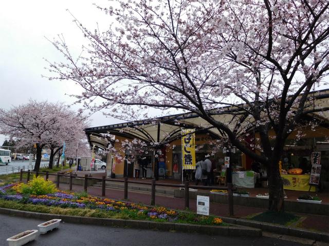 飛行機ファンにはたまらない!?成田さくらの山公園の桜も満開でした!