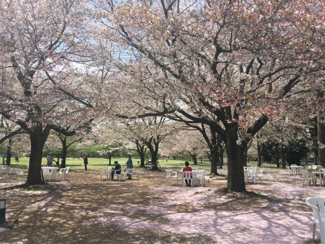 逃走中のロケ地でおなじみの房総のむらへ桜を見に行って来ました